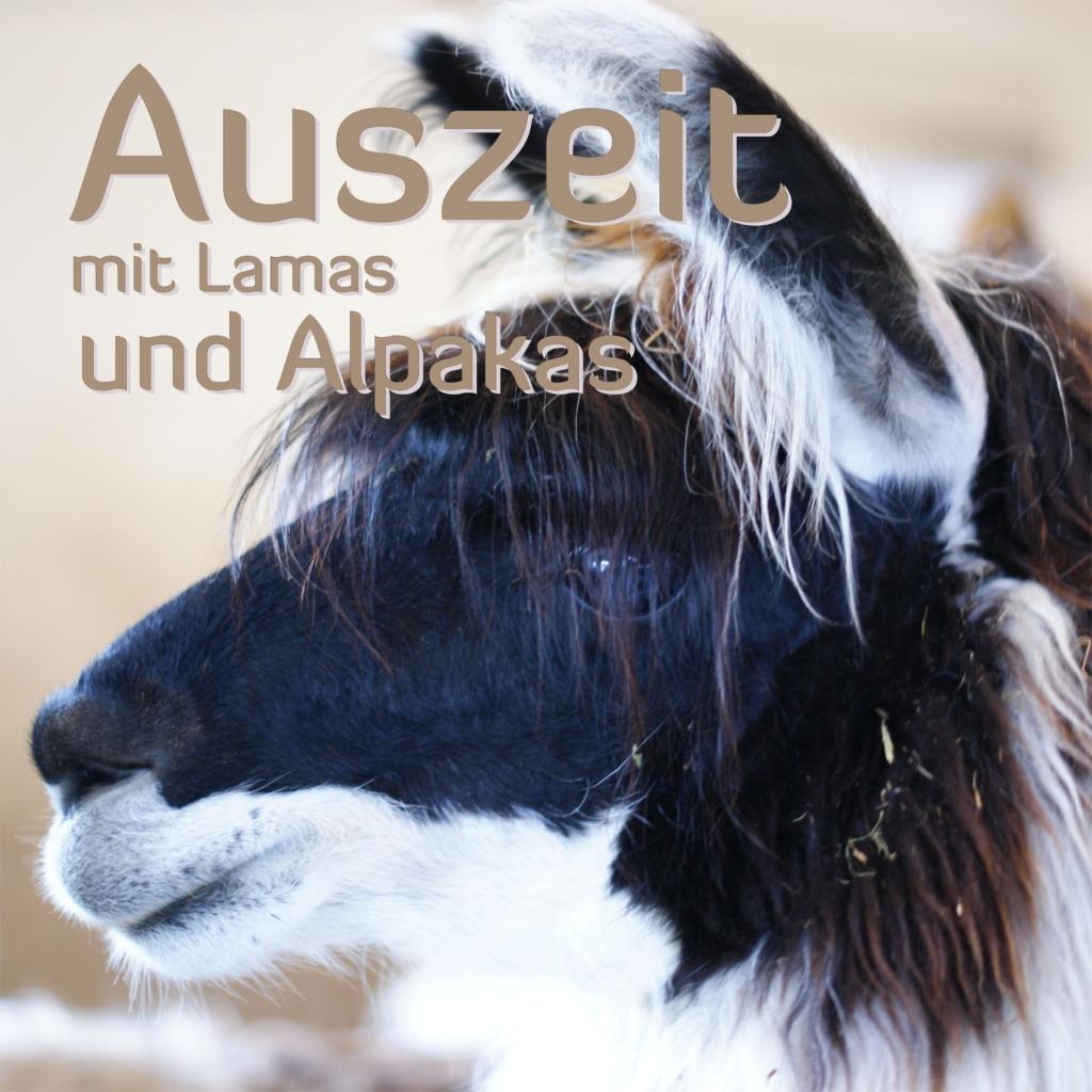 Lama und Alpakas